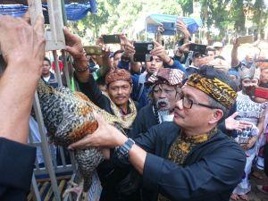 HUT Kabupaten Bandung : Kontes Ayam Pelung dan Budaya Hadir di Alun-alun Soreang