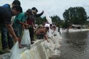 Bupati Samosir Tabur Benih Ikan 30.000 ekor di Pea Aek Tawar