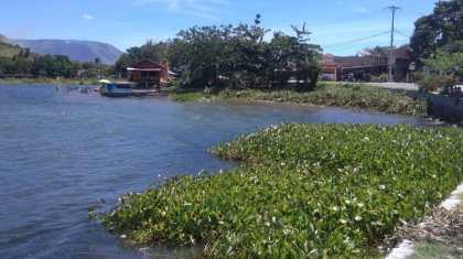Dinas Lingkungan Hidup Bersihkan Enceng Gondok di Tepi Pantai Kota Pangururan