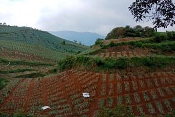 Perhutani KPH Bandung Selatan Bantah Program RHL Gagal