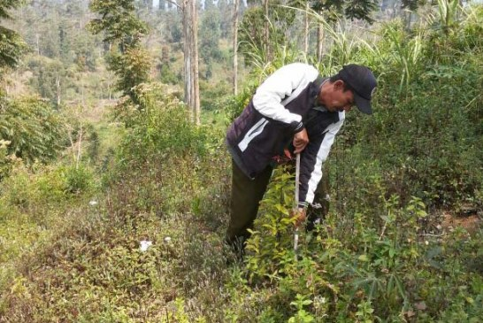 Progran RHL Perhutani BKPH Ciwidey dan Tambak Buruyung Timur Berhasil
