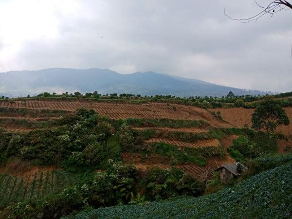 Pemkab Mendorong Petani Melakukan Pertanian Organik