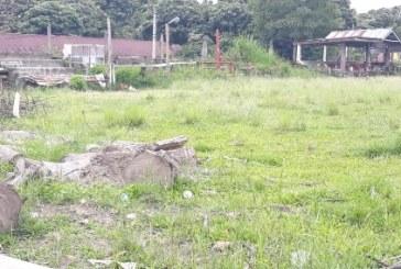 Rumput Tanah Lapang Ambarita Bagaikan Jalangan Rimba