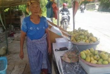 Cerita Op Benget Penjual Mangga Musiman di Samosir Modal Koperasi.