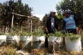 Tahun 2000, Bisnis Stroberi di Bandung Selatan Sempat Dongkrak Perekonomian