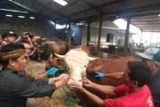 Distan Himbau Masyarakat Waspadai Penjualan Hewan Kurban Secara Online